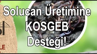 Solucan gübresi üretimi KOSGEB devlet desteği nasıl alınır
