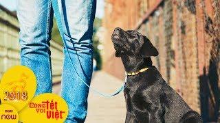 Nuôi chó giúp người độc thân sống thọ hơn | VTC1