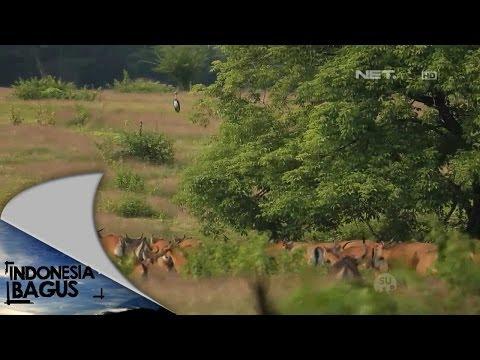 Indonesia Bagus - Keragaman di Taman Nasional Alas Purwo