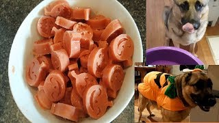Halloween Watermelon Frozen Dog Treat Recipe - German Shepherd Halloween Pumpkin Costume Fail