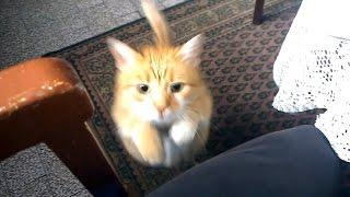 これがNNNのやりかたか~!いつなんどきでも飼い主の膝に乗りスリスリする猫