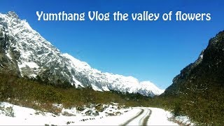 Yumthang Vlog the valley of flowers