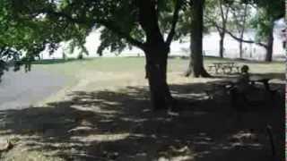 64.Белки в Нью Йорке.Животные и природа в Америке,США.Squirrels New York  Animals and Nature in USA