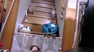 ミニチュアダックスのらなぞうは二階にあがりたがりやさんです。上って...