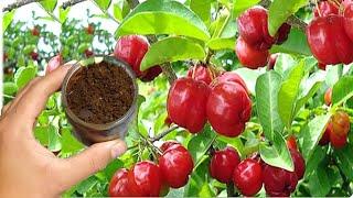 Carga De Frutos Na Sua Planta O Ano Todo