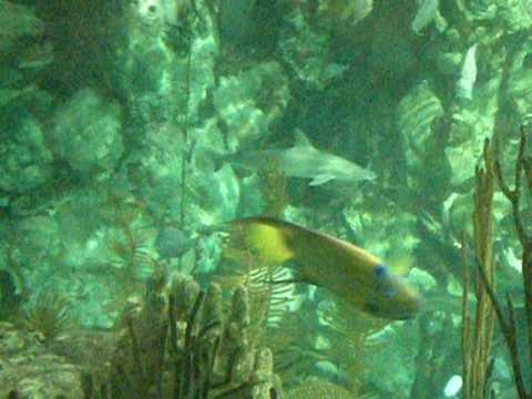 Inside the Aquarium in Chicago Illinois