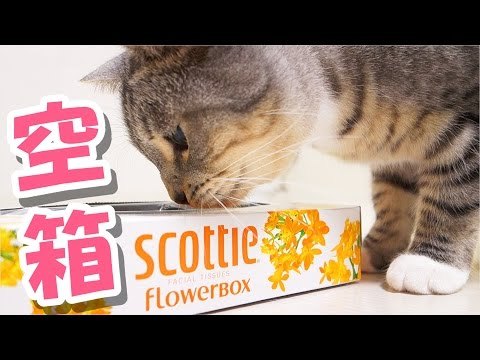 funny cats playing with tissue box / 【猫 おもしろ】ティッシュ箱で遊ぶ猫ズ