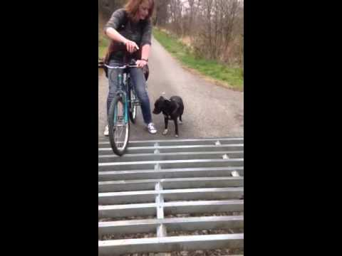 Dog moonwalk over cattle grid