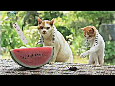Japanese tourism commerical ads, with cats!!!