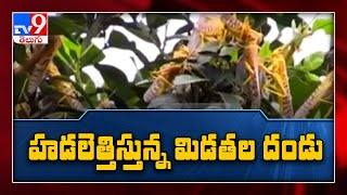 East Africa's locust outbreak continues into a 2nd year - TV9