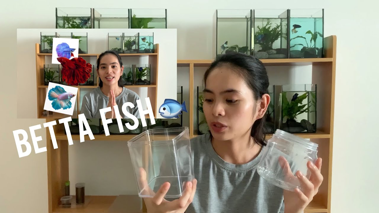 MY BETTA FISHES • BETTA PHILIPPINES