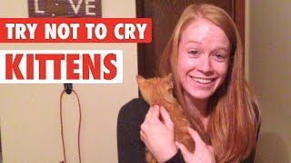 People Get Surprised With Kittens | Try Not To Cry Video