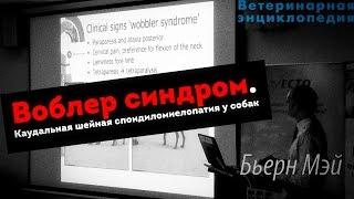 Каудальная шейная спондиломиелопатия у собак. Воблер синдром. Wobbler syndrome