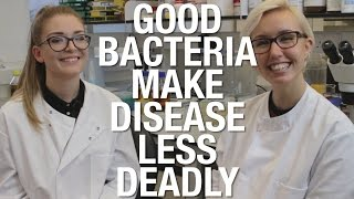 Good bacteria make disease less deadly | Shed Science