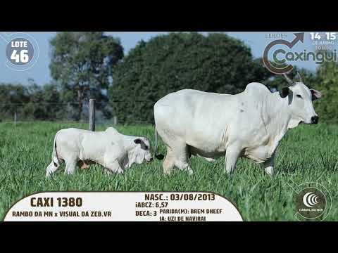 LOTE 46   CAXI 1380