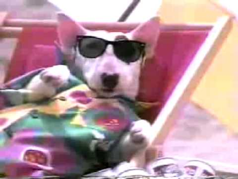 bud light spuds mackenzie 1986 youtube