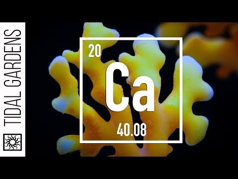 Reef Chemistry: Calcium Level Testing