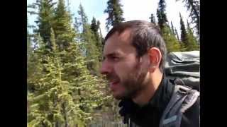 Hiking Stampede Trail to Fairbanks Bus 142