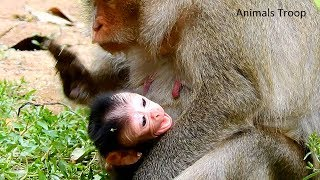 Look like adorable newborn crying, Super cute newborn monkey