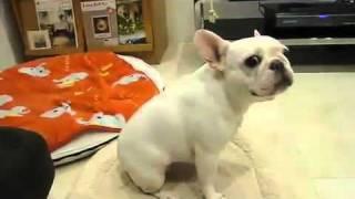 Spacy.Tv - Танцующая собака