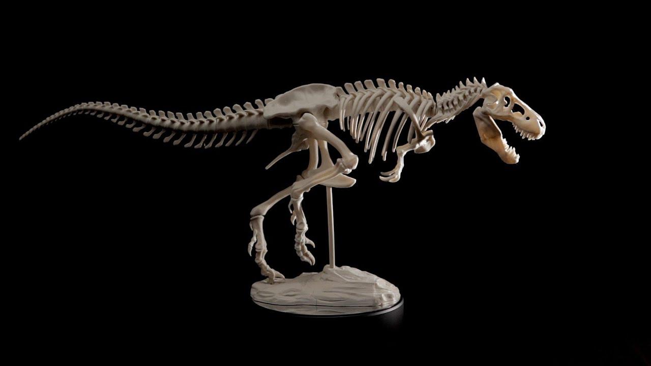 Free 3d Dinosaur Wallpaper T Rex Skeleton 360 Degree Rotation Youtube