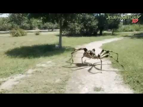 Giant Spider in Park
