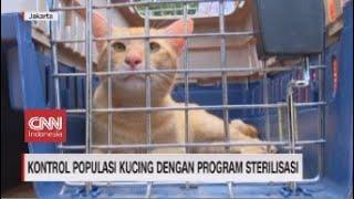 Kontrol Polpulasi Kucing dengan Program Sterilisasi