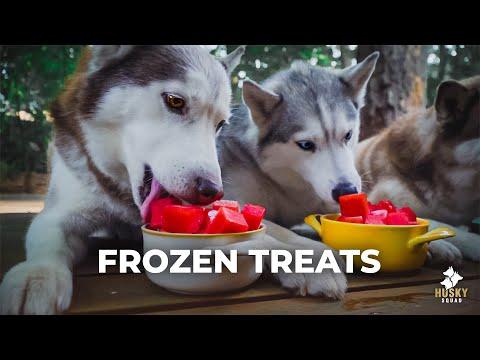 Watermelon DYI Frozen Homemade Treats For Dogs | Husky Squad