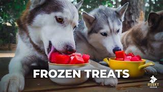Husky Watermelon Treats - DIY Dog Snacks
