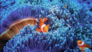 Unesco, Venezia e la barriera corallina sono a rischio: la