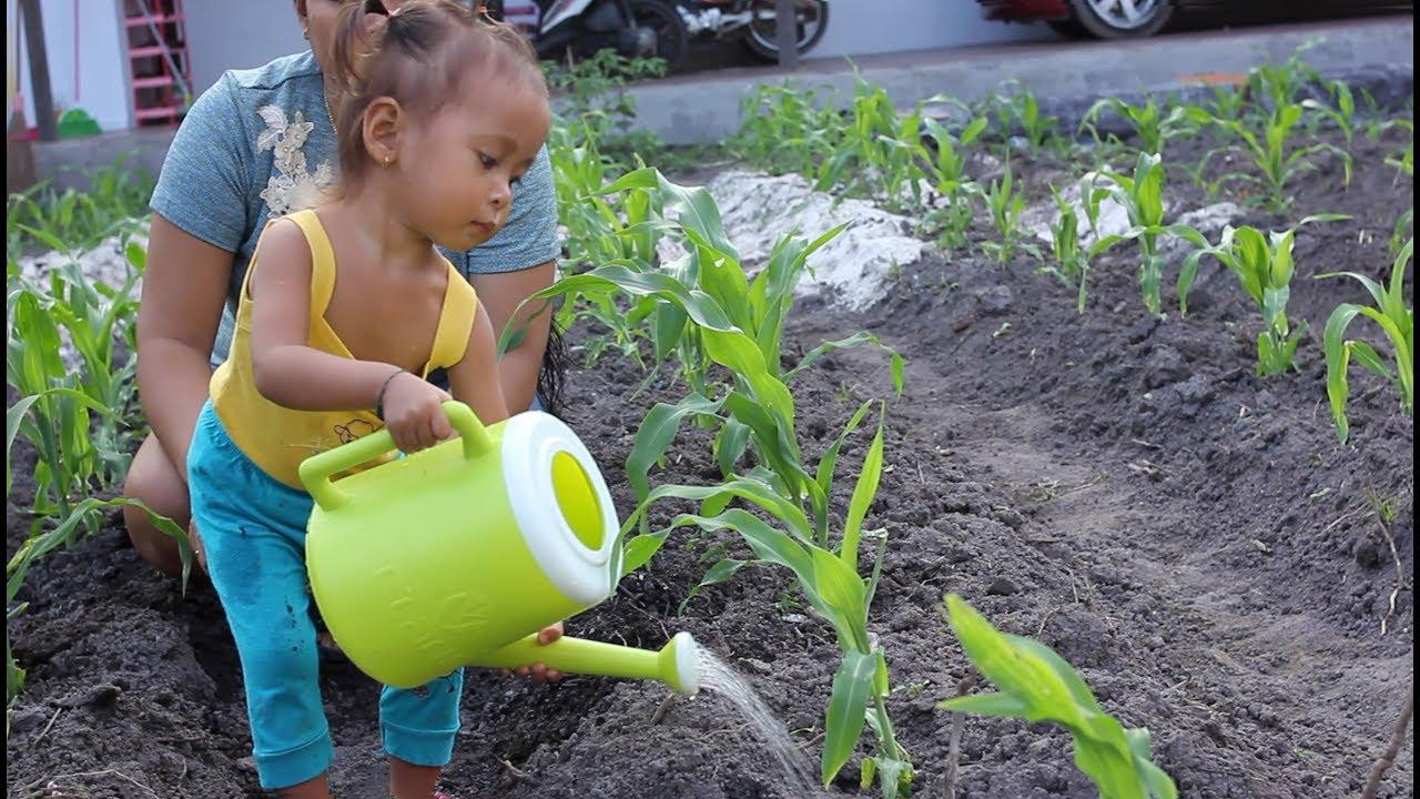 Balita Lucu Menyiram Tanaman Jagung  Cute Baby Watering