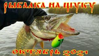 Ловля щуки на спиннинг в октябре 2021 Рыбалка на щуку Ловля щуки на воблеры