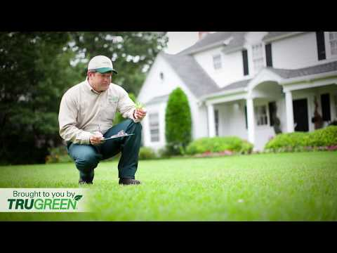 What To Expect From Your Lawn Care Plan From TruGreen
