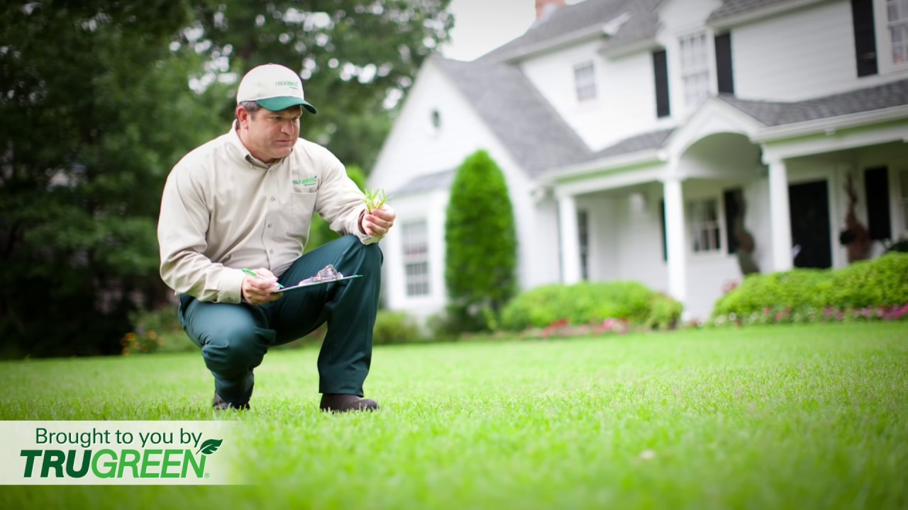How Much Is Trugreen Lawn Service 1500 Trend Home