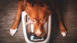 PetSafe Treat & Train Dog Trainer - First Impressions