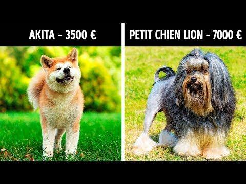 Tapis Educatif - 10 astuces à connaître - Education canine - Tutorial