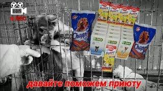ПОМОЩЬ БЕЗДОМНЫМ ЖИВОТНЫМ//приют для животных г. Витебск