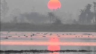 Sarus crane - The early bird catches the beautiful sunrise