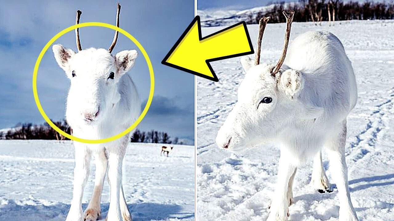Norwegian Photographer Stumbles Upon A Mythical Creature While Trekking In The Hamnøy Mountains