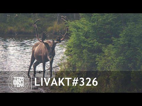 LIVAKT#326