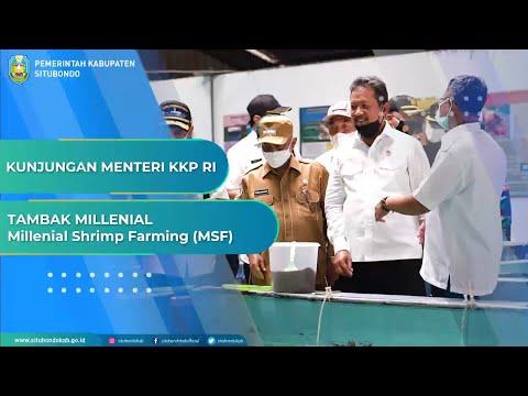 Kunjungan Menteri KKP RI Ke Tambak Milenial Di Kabupaten Situbondo