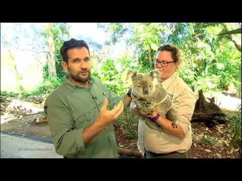 Cangurus E Coalas Ganham Destaque Em Santuário De Bichos Na Austrália