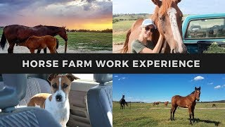 WORKING HOLIDAY AUSTRALIA -  Horse Farm Work Experience