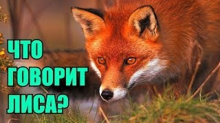 �������� ���� Ylvis - The Fox (
