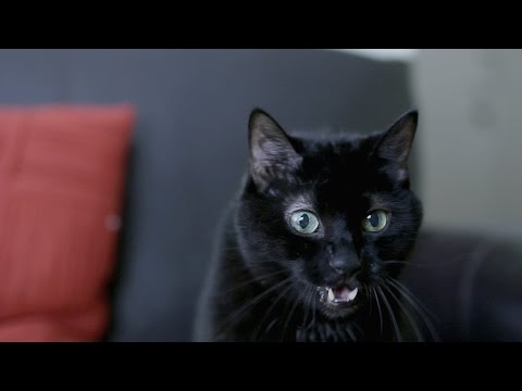 N2 the Talking Cat S4 Ep2 - Time Dogs