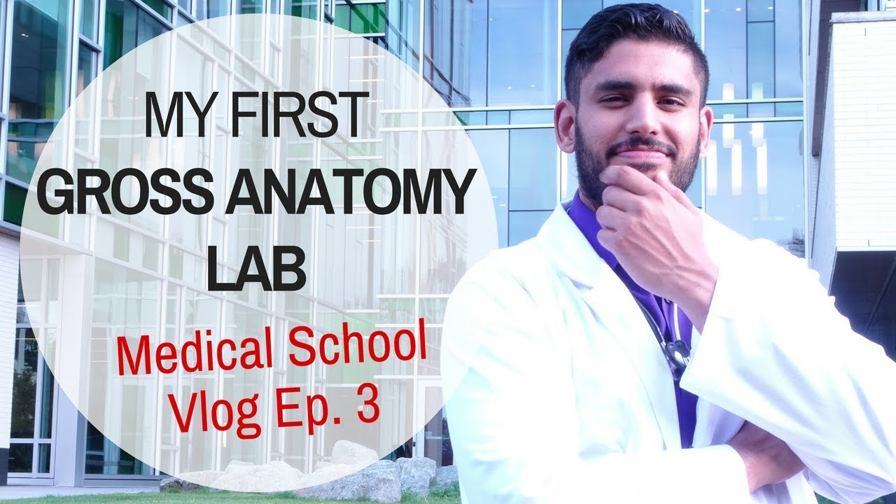 My First Gross Anatomy Lab | Medical School Vlog Episode 3 - YouTube
