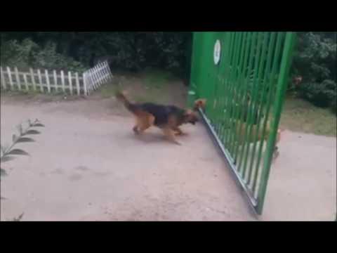Cute Dogs - Komik Köpekler