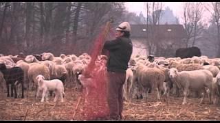 TRANSUMANZA 3 Verso sera, pastori e pecore al Bassone