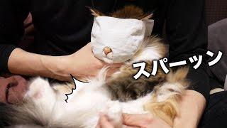 猫マスク被せたら、ちゃちゃが豹変した thumbnail