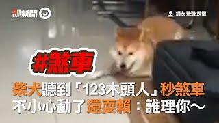 柴犬聽到「123木頭人」秒煞車 不小心動了還耍賴:誰理你~